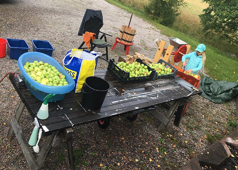 Hur gör man äppelmust - förberedelser 5