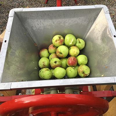 Hur gör man äppelmust - dags att musta äpplen 5