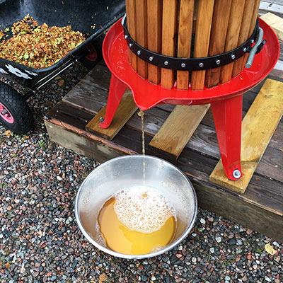 Hur gör man äppelmust - dags att musta äpplen 17