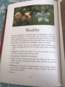 Risäter och Wealthy 2