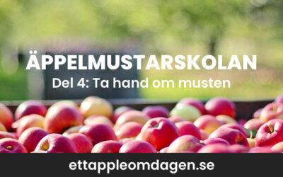 Hur gör man äppelmust – ta hand om din must