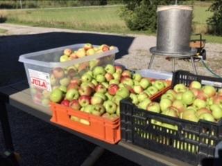 Äpplets Dag 2021 – Quiz
